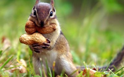 Can you market to squirrels?